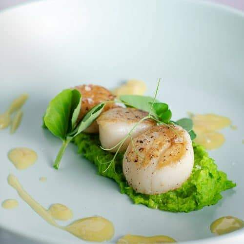 A closeup view of a dish of 3 pan seared scallops on a bed of vibrant green pea puree, a drizzle of rich yellow butter sauce and topped with fresh green pea shoots on a pale green plate.
